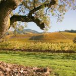 My History in the Vines