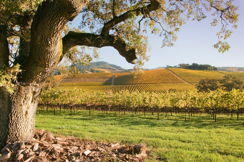 Vineyard and Oak from the Central Coast AVAs